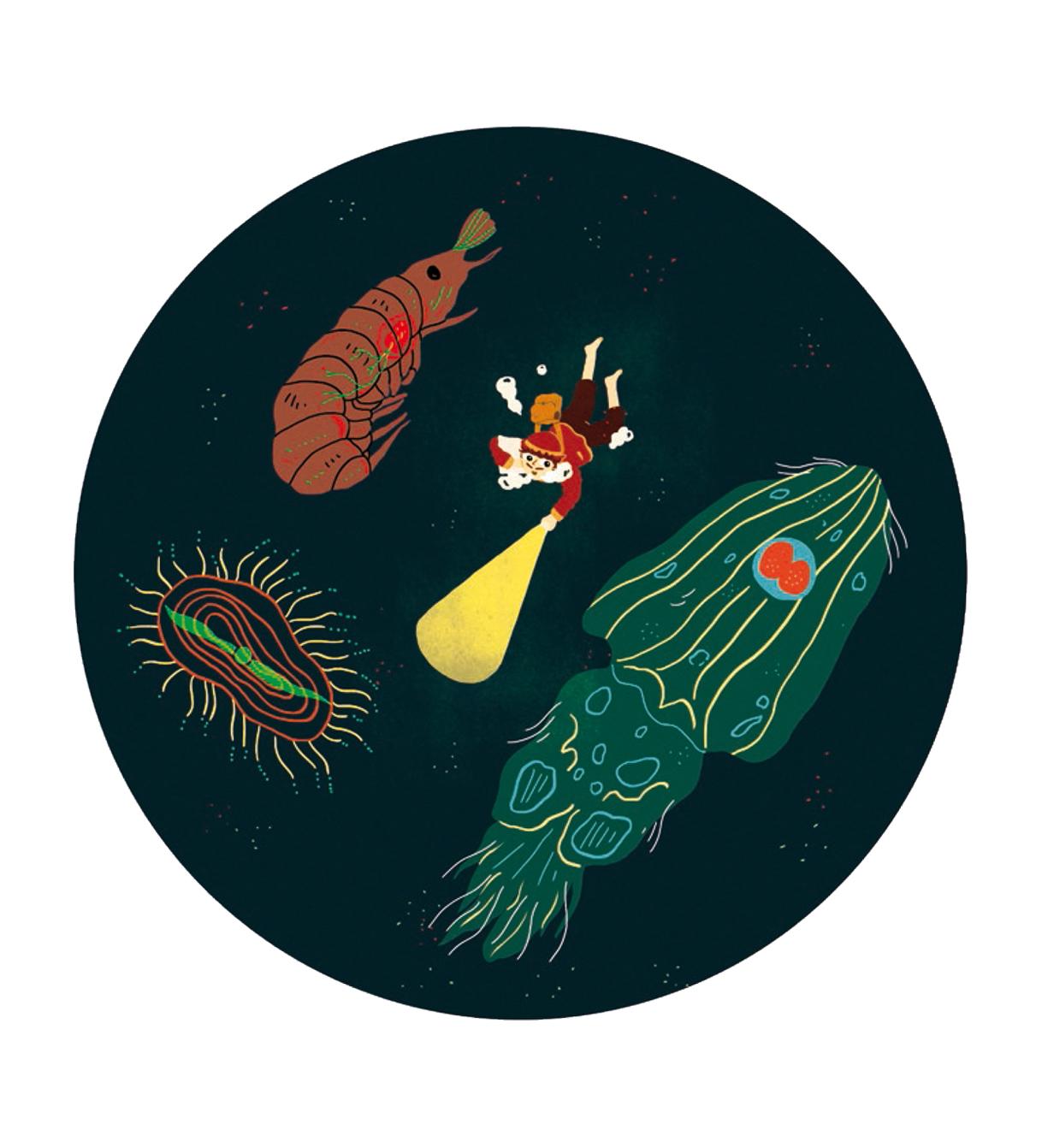 illustration la biodiversité